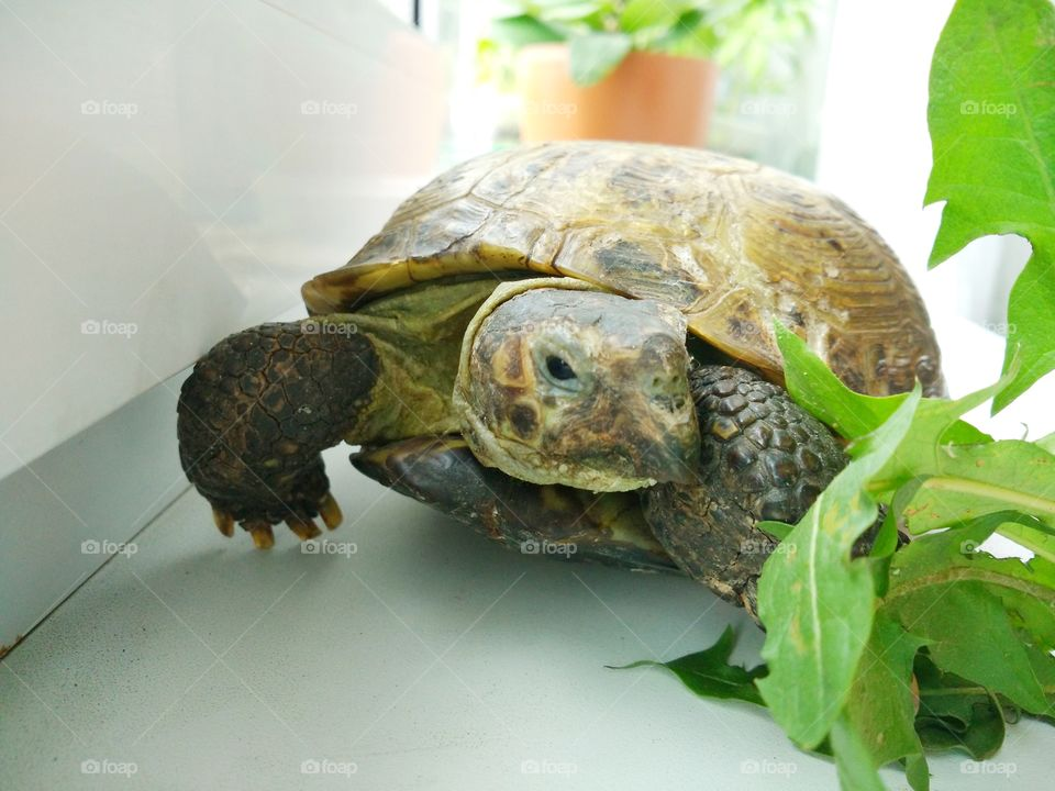 Turtle at home
