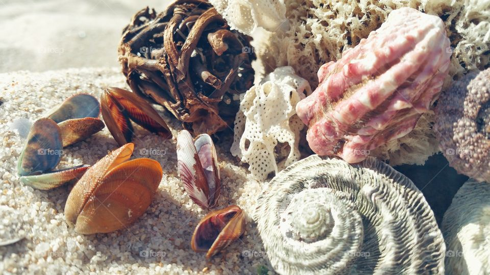 Verity of seashell