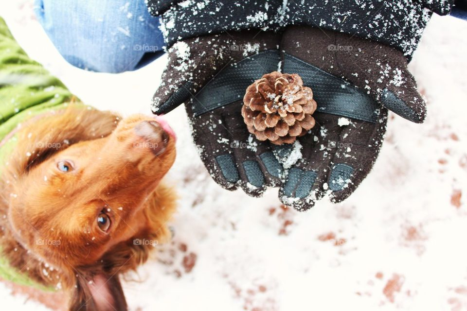 Elevated view of pine cone of person's hand with dog