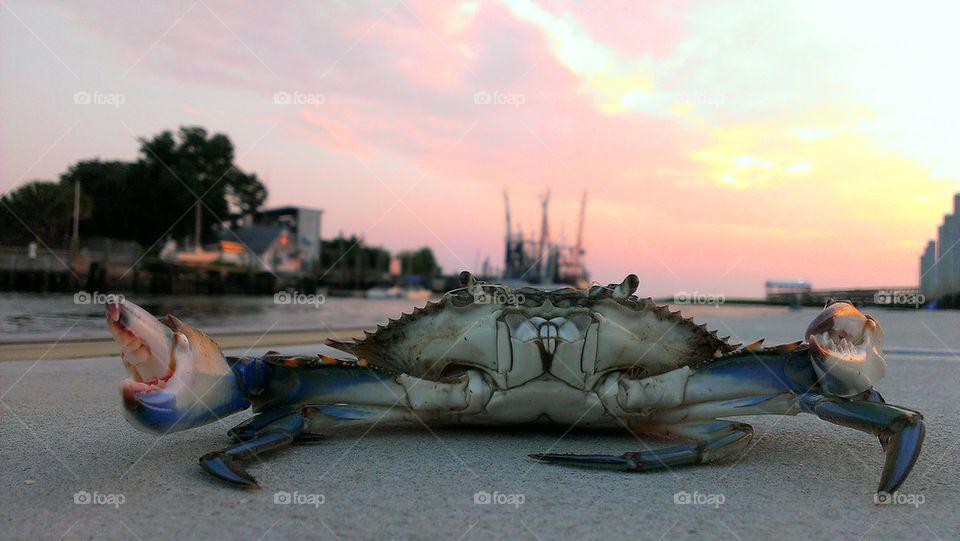 Close-up of blue crab