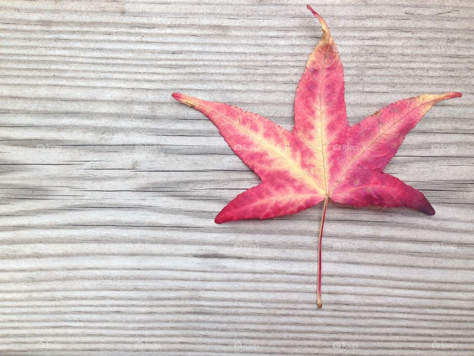 Fall autumn leaf on wood grain background copy space