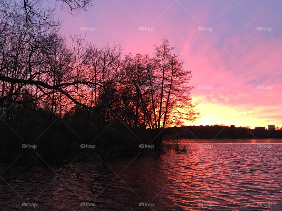 Sunset lake and tree