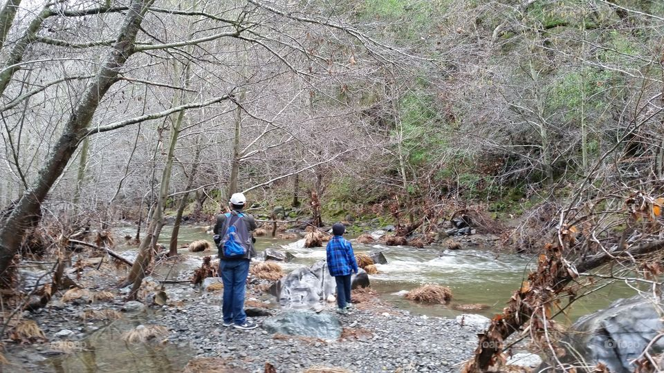 Hikers admiring nature along a stream in forest
