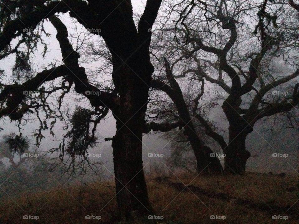 Spooky Trees | muneca, oak trees, old trees, creepy