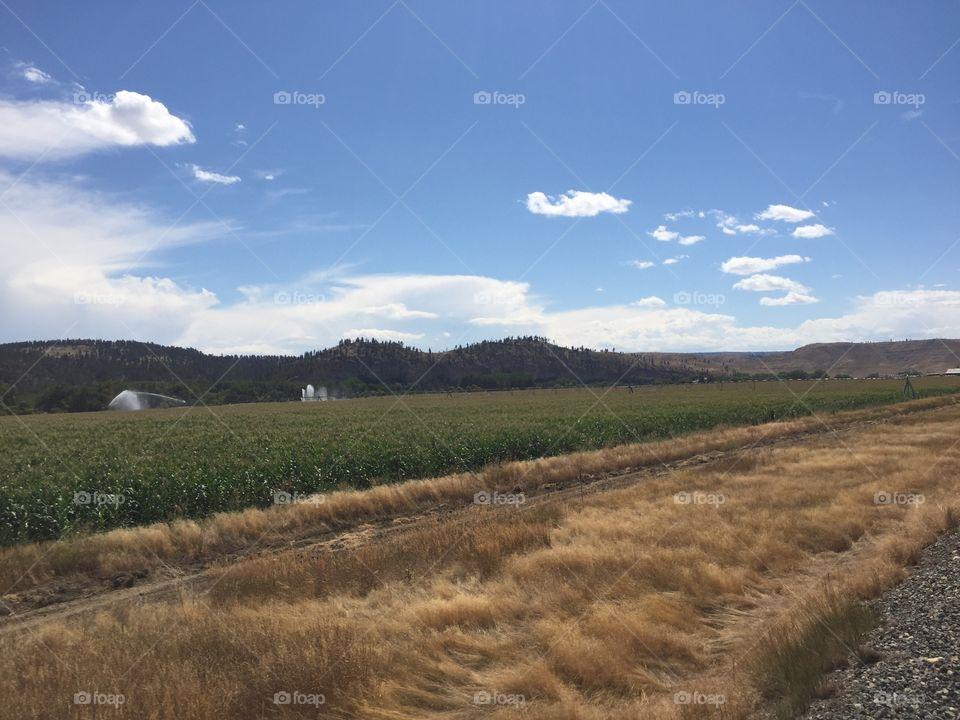 No Person, Landscape, Agriculture, Sky, Nature