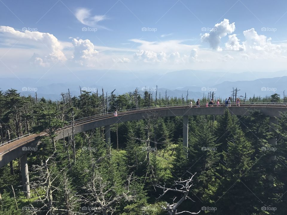 Stunning path to the lookout over Klingman's Dome, the highest point of the Great Smokey Mountains in Tennessee.