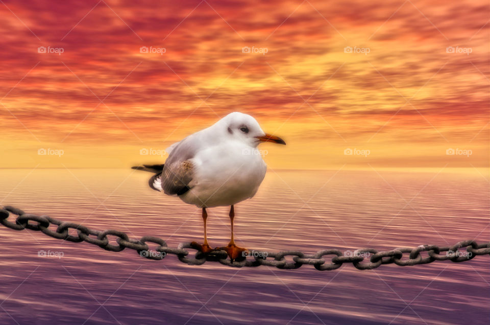 Gull on the Chain rope