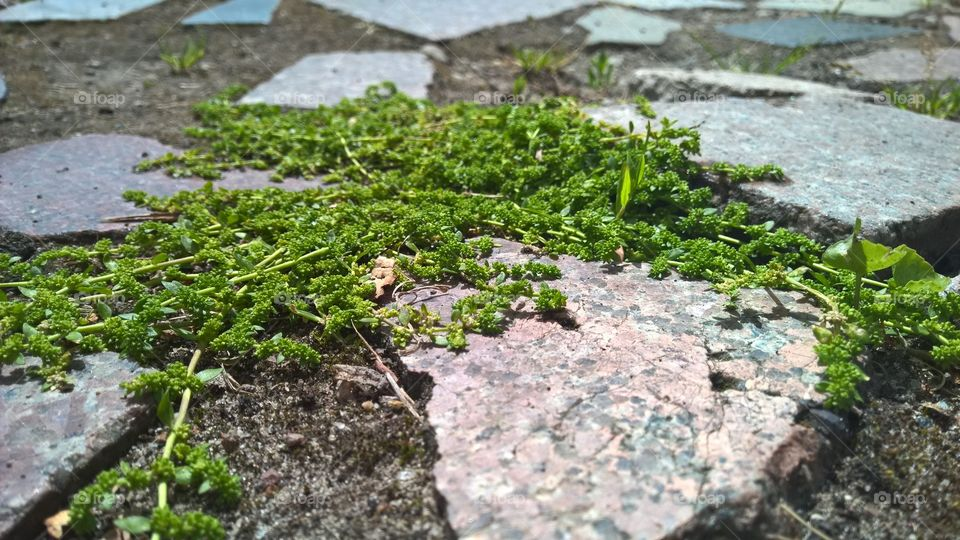 Herbs or grass.