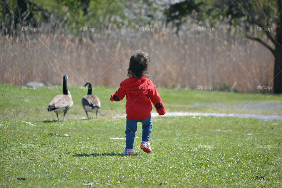 Rear view of a girl chasing geese in park