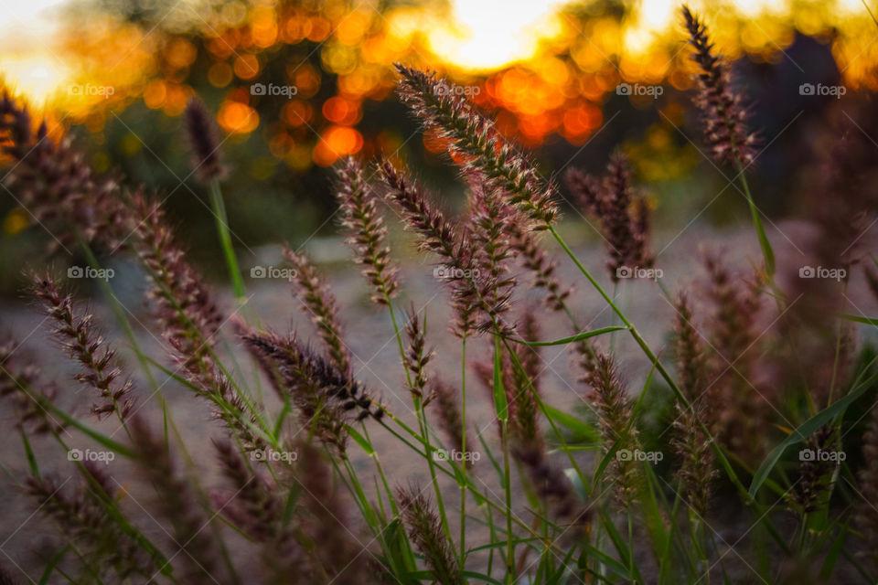 Flower, Nature, Garden, Field, No Person