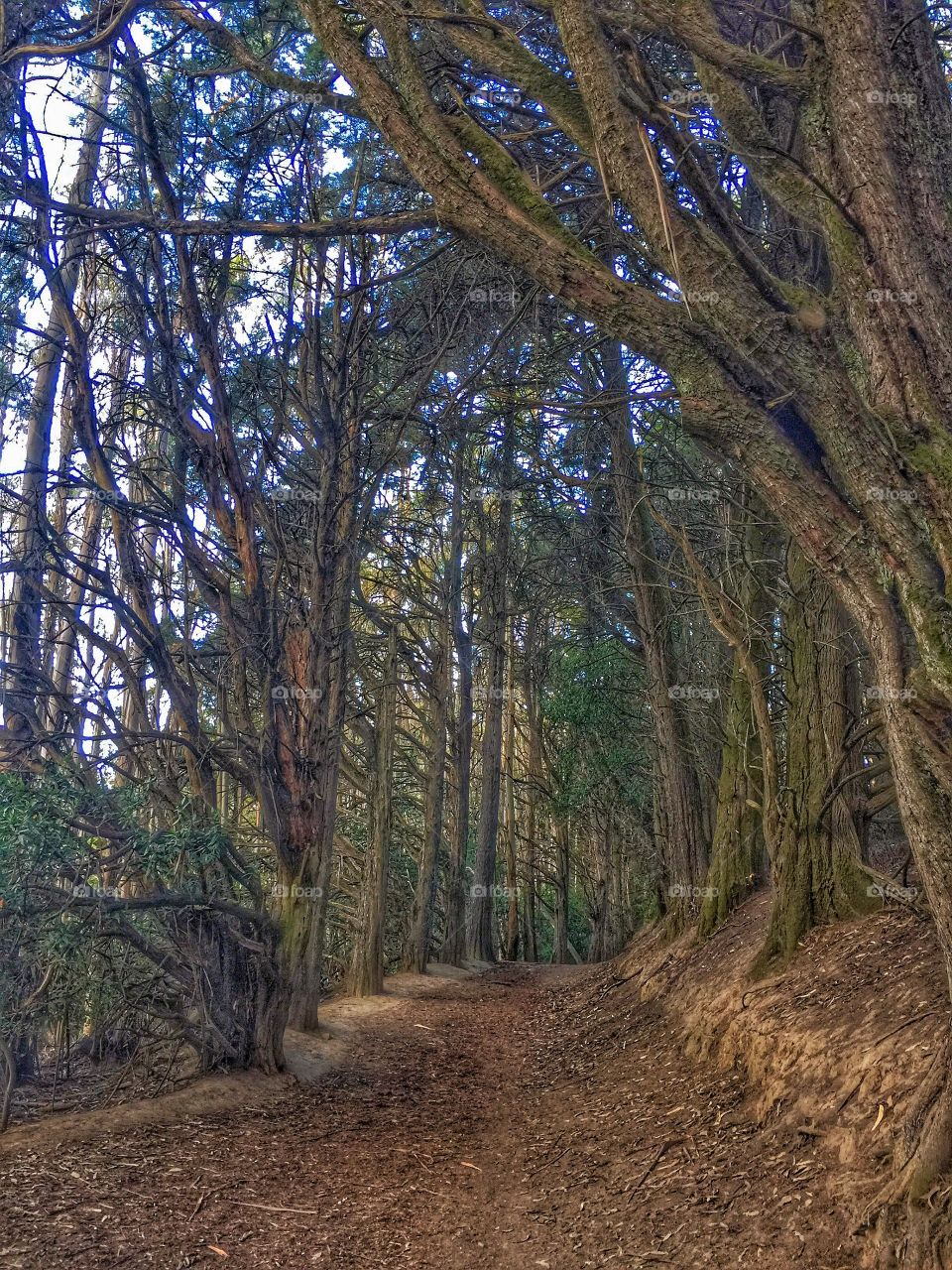 Serenity Trail . Hiking in the Redwood Regional Park, Oakland, Ca.