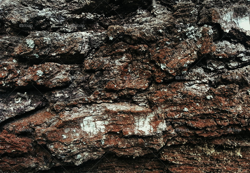 Epic tree texture background