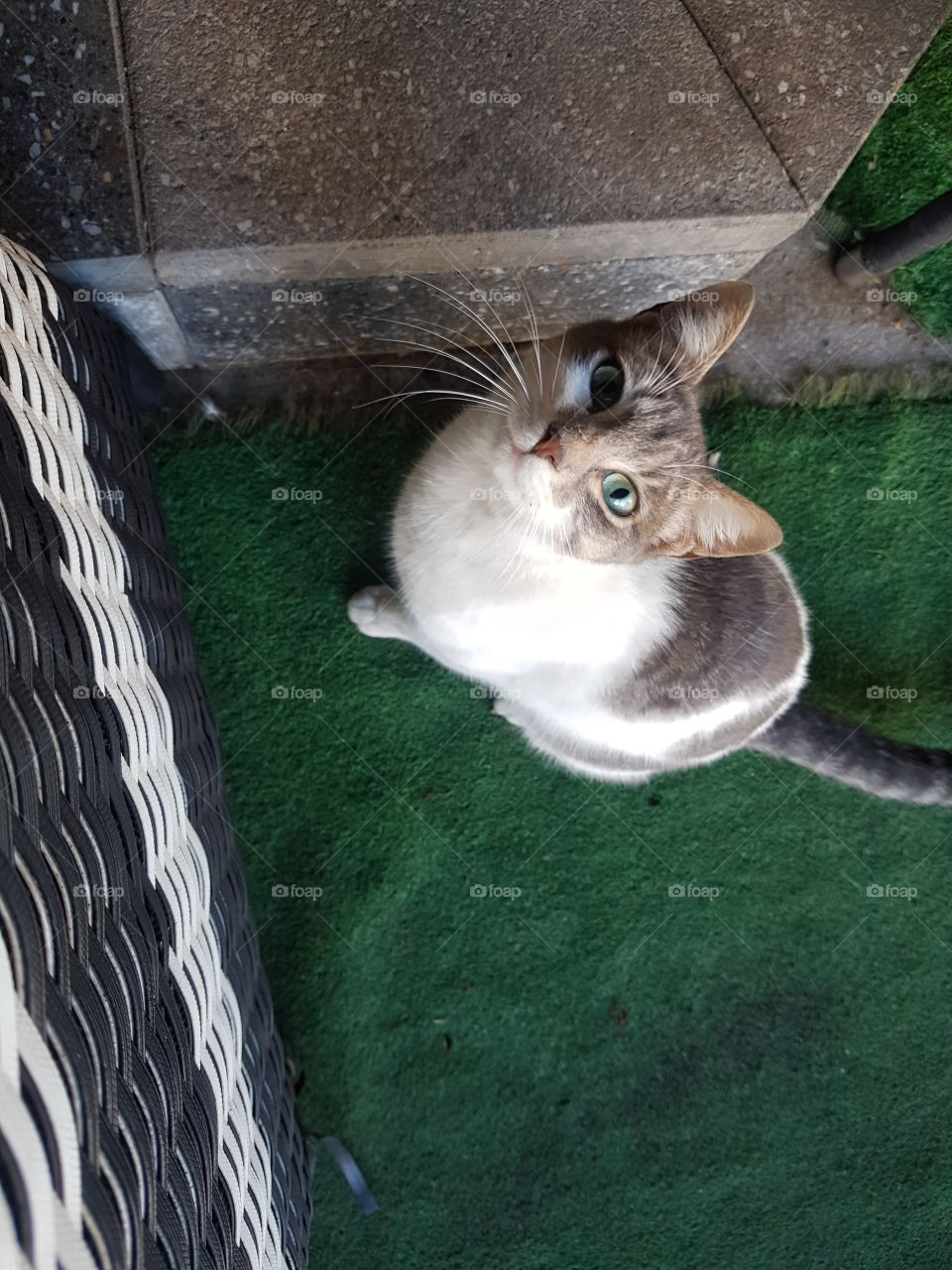 Cute Cat in the Cafe Place