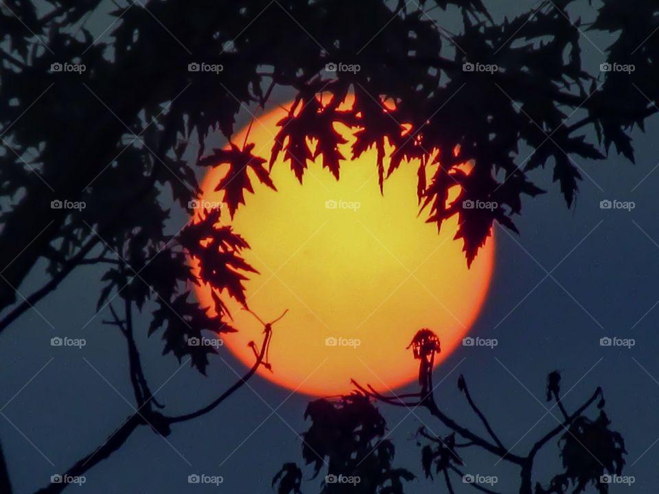 Tree Hugging Sunset