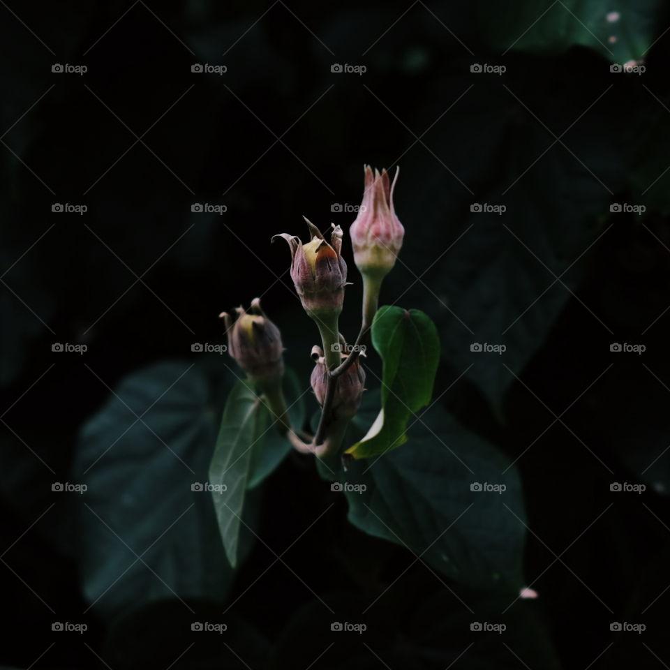 flower inthe dark