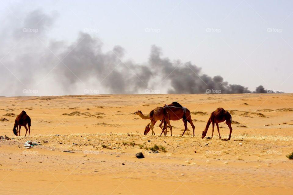 Smokey Desert . Driving through desert in Saudi Arabia to Qatar .
