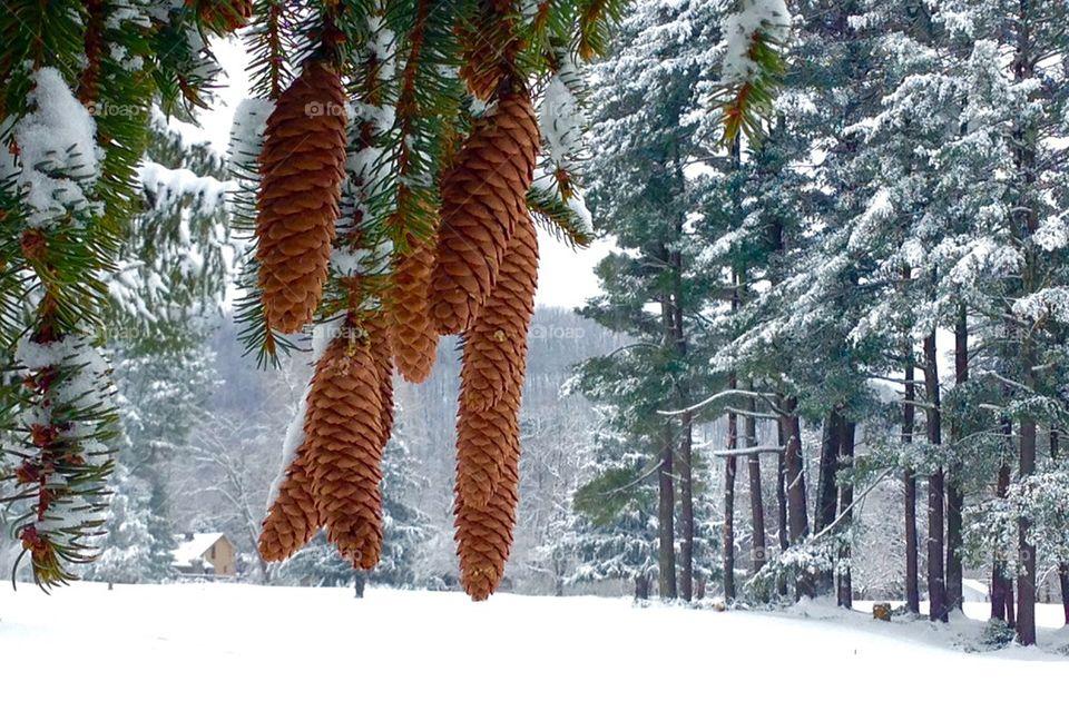 Evergreen Snow World