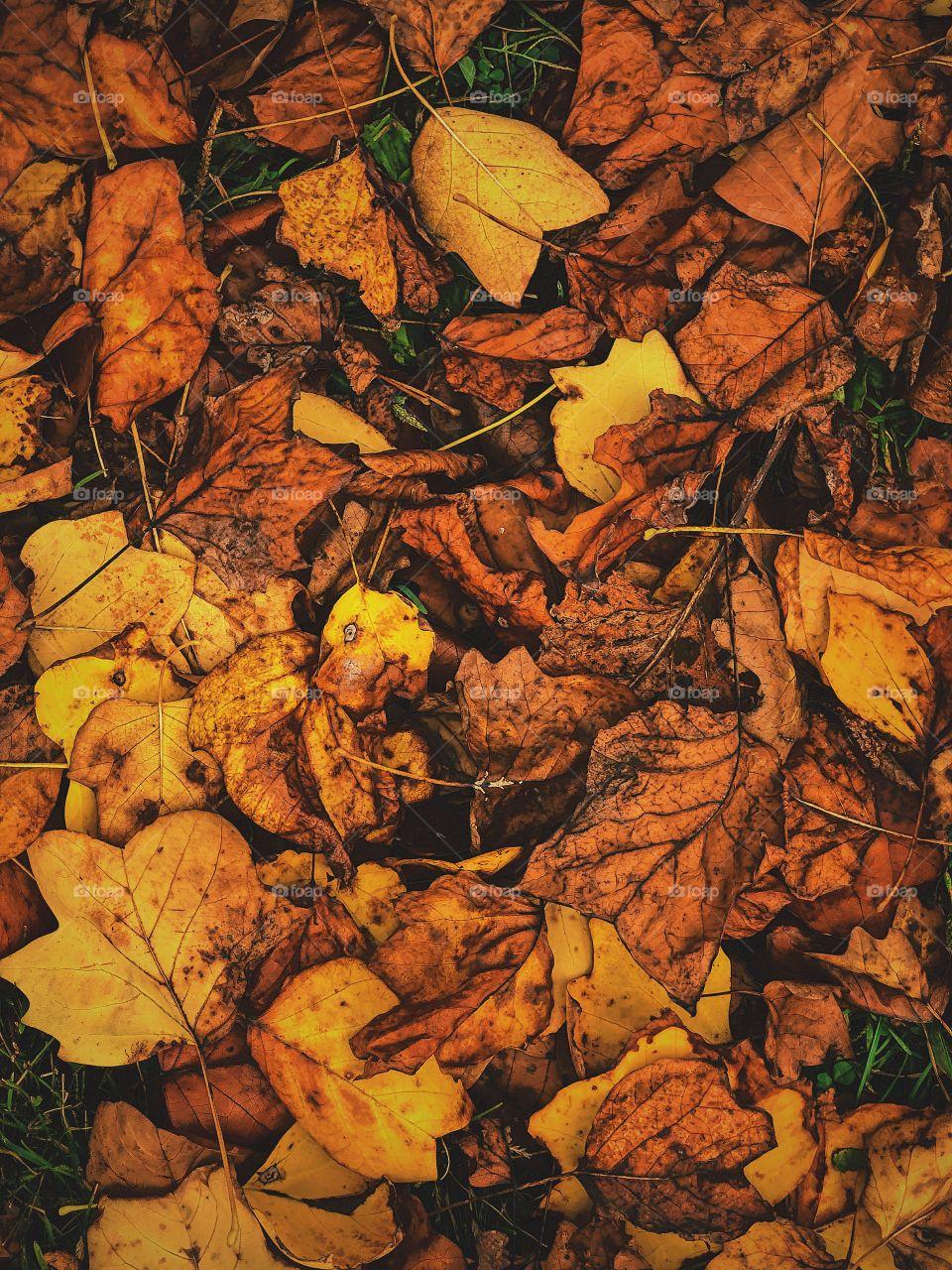 Fallen Leaves On The Ground, Fallen Leaves In The Forest, Colorful Leaves On The Ground, Details In The Leaves, Autumn Leaves In The Woods