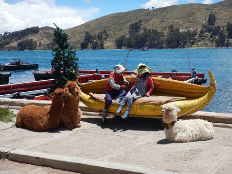 Kids and Alpakas @ Lake Titicaca