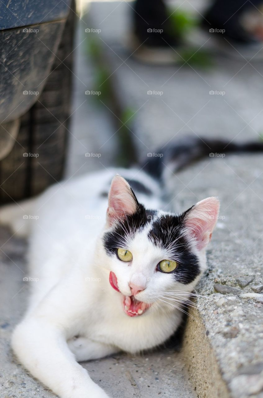 Portrait of a cat sitting outdoors