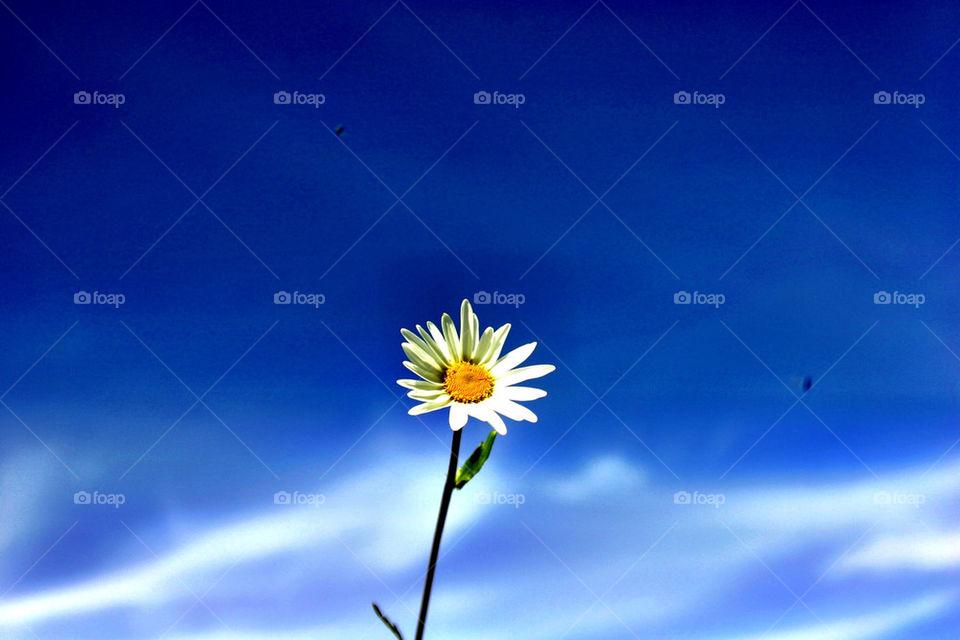 Single flower against blue sky