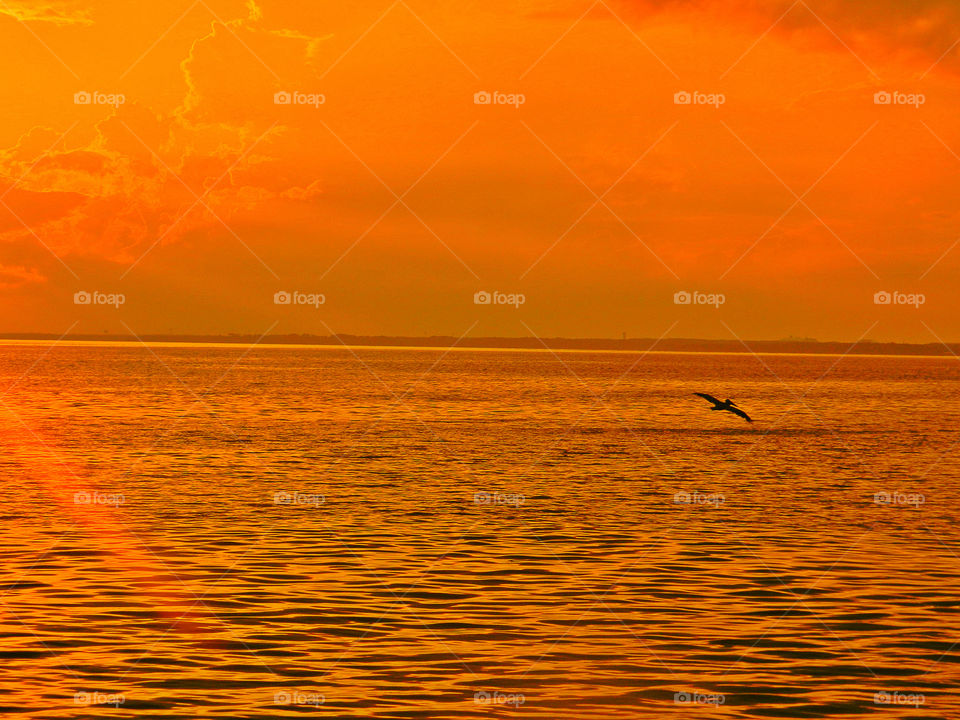 Orange Glaze. The sun exploded and painted the  bay, sky and clouds with an orange mist. A pelican dives for fish on the wavy bay!