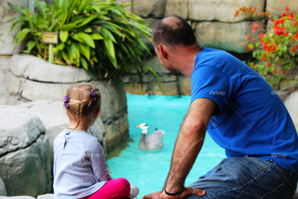 Rear view of a father and daughter near duck in pond