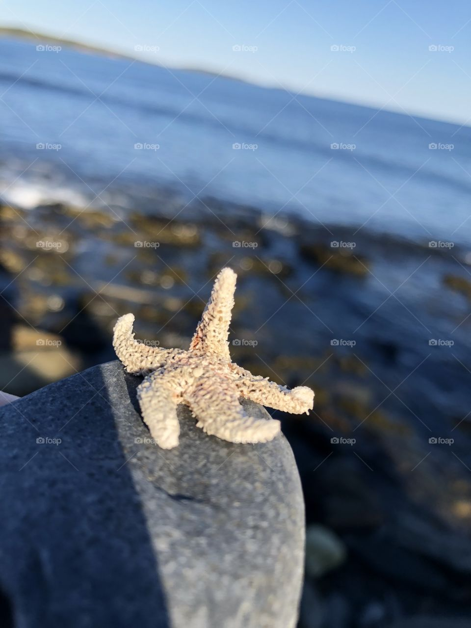Beautifully shown how the cycle of the life of a starfish is and how it may end