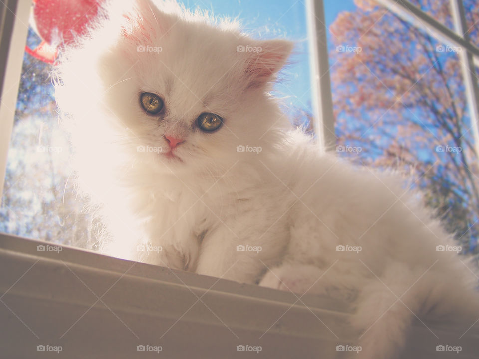 White kitten sitting on window