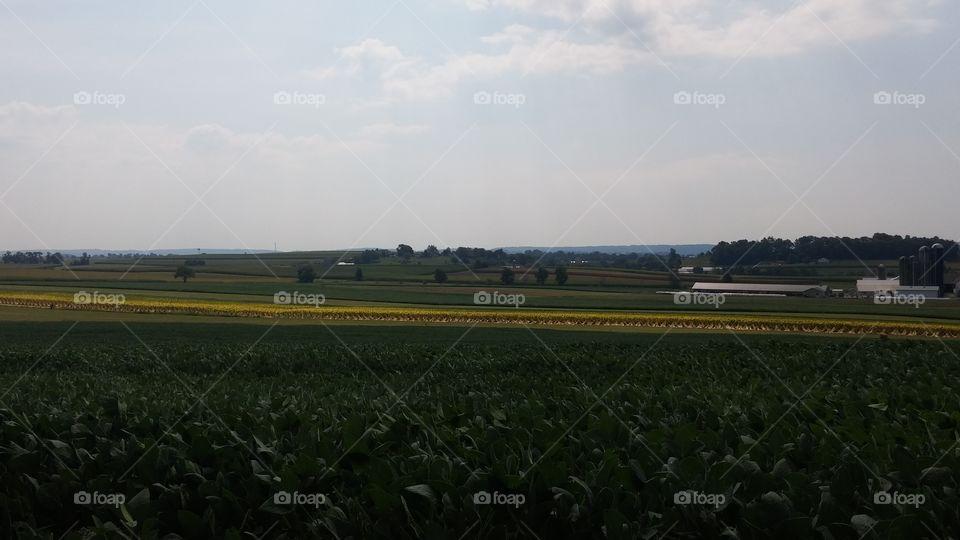 Pennsylvania lancaster. Farms