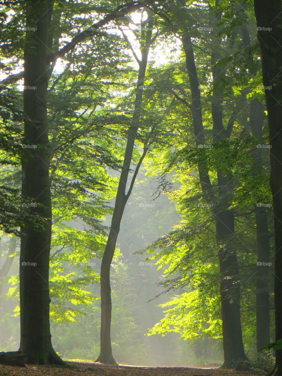 Sunlight in green forest