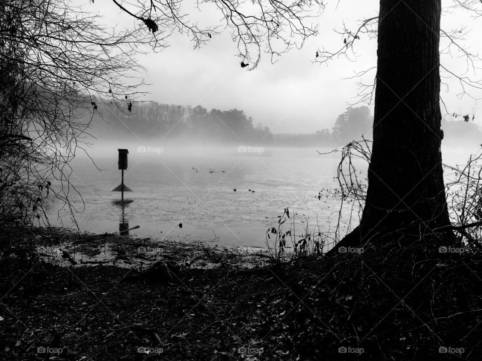 Black and white of a wood duck box on the foggy lake
