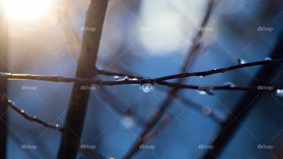 ice droplets on the birch tree branches on a cold winter afternoon