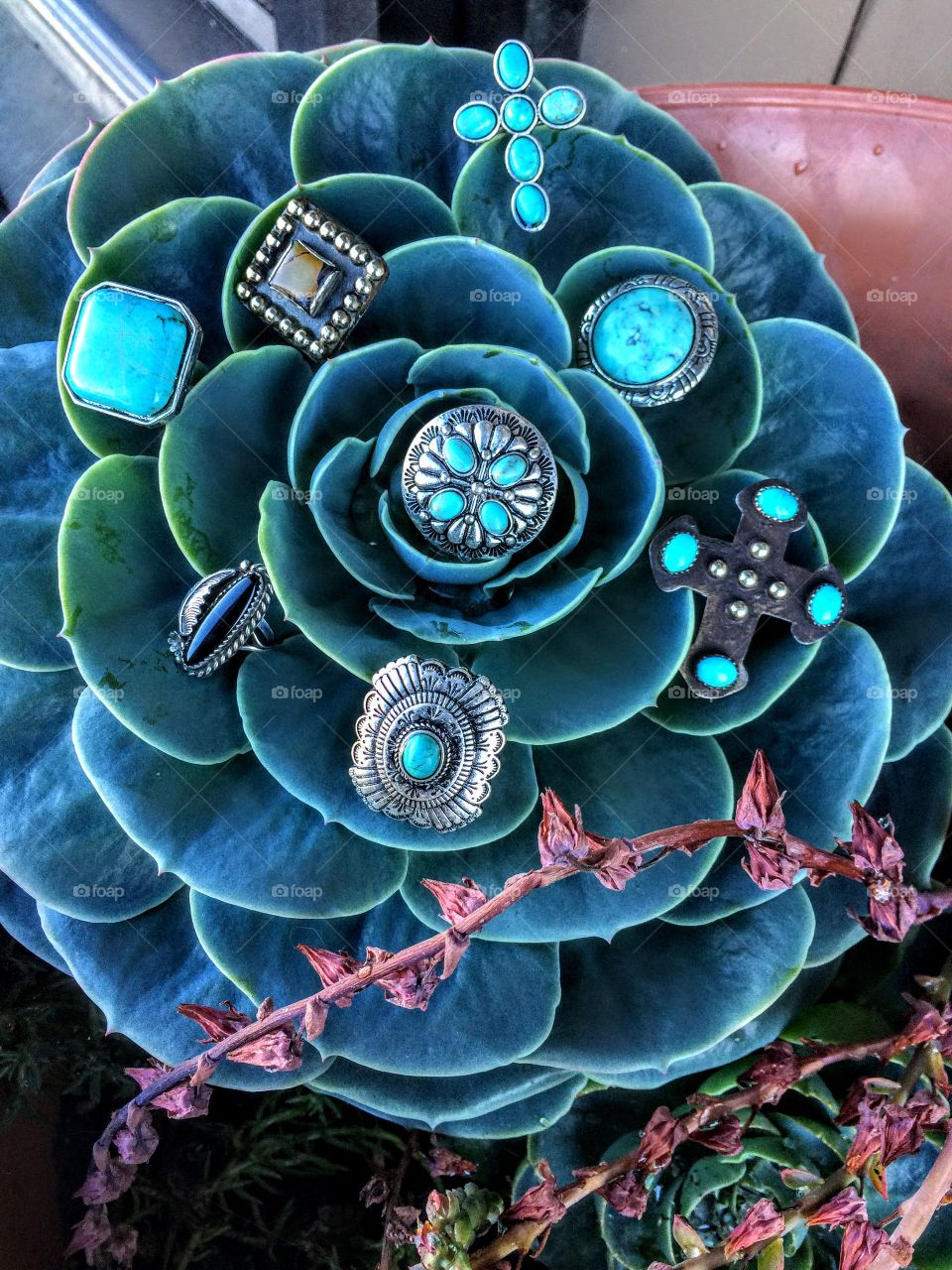 WHO DOESN'T LIVE CACTUS AND RINGS!?