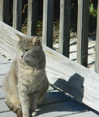 Close-up of sitting cat