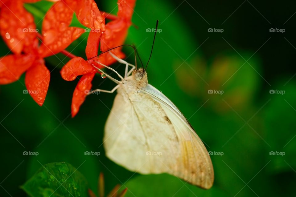 Butterfly Macro Shot, Beautiful Butterfly, Butterfly With Water Droplets, Flower And Butterfly, Closeup Of A Butterfly, Butterfly Wings