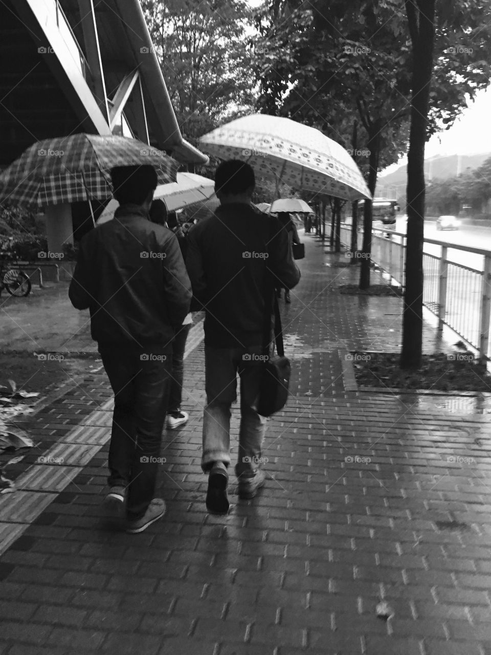 Commuters Walking with Umbrellas in the Rain - Shenzhen, China