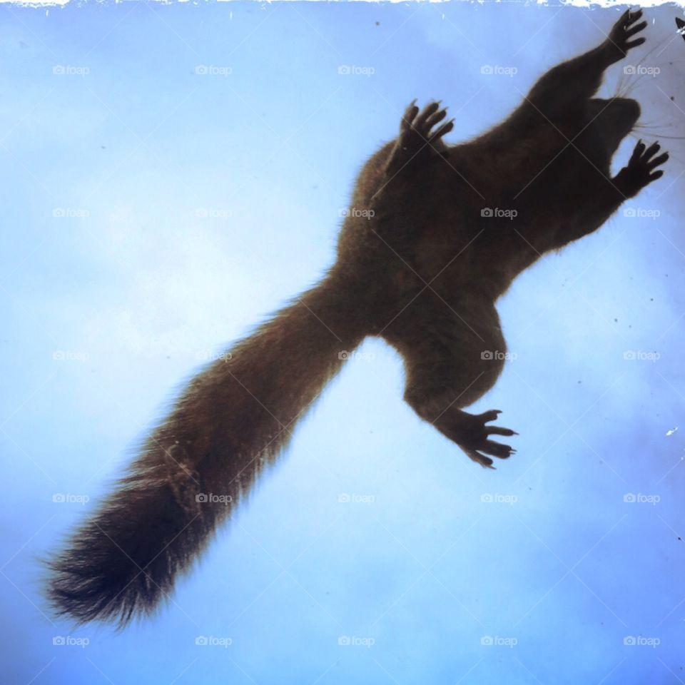 grey squirrel escape . grey squirrel escape