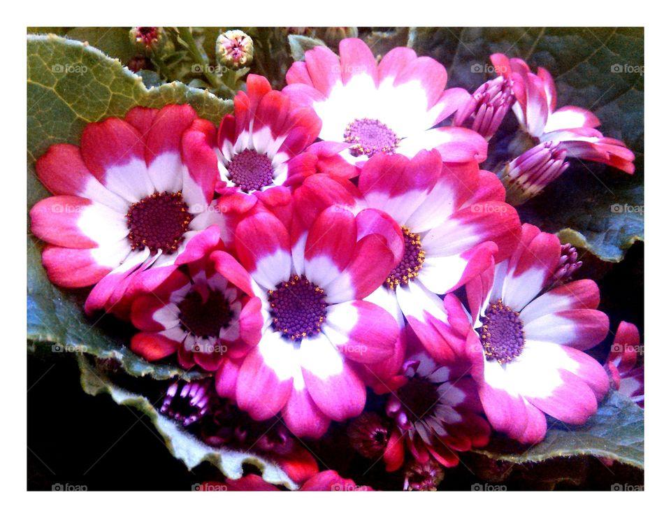 beautyfull spring flowers
