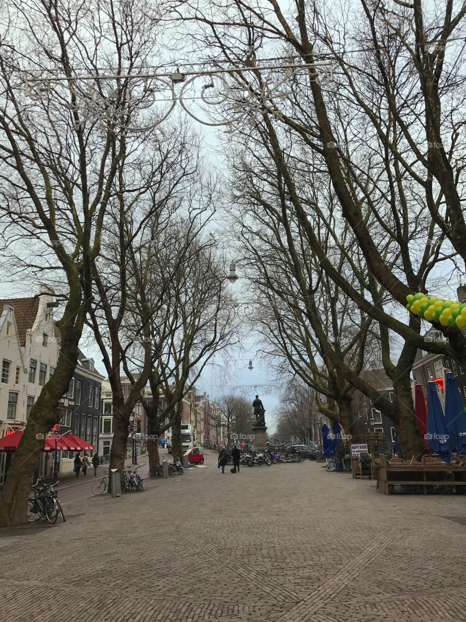 Trees in Amsterdam