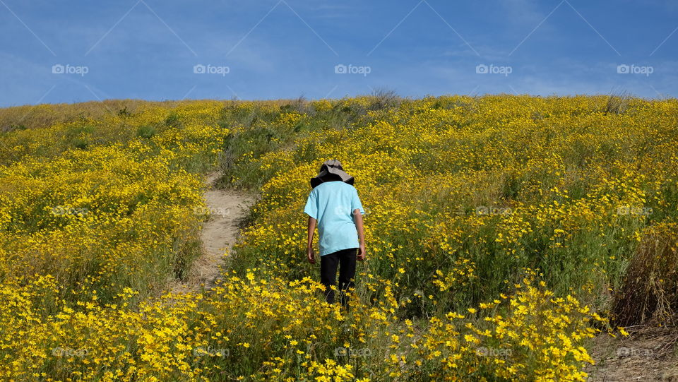 Hiking through wildflowers