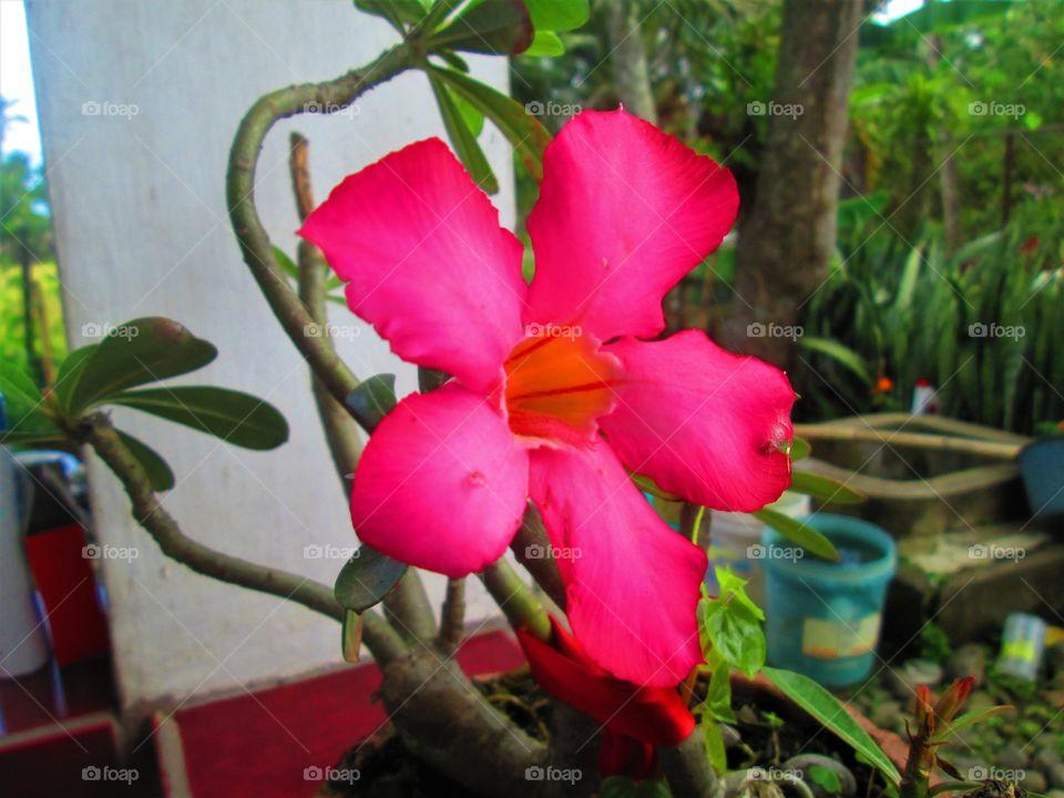 Pink flower 🌺