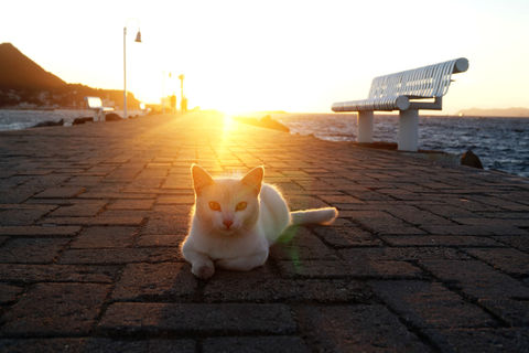 Cat lying on pier at sea with sunlight