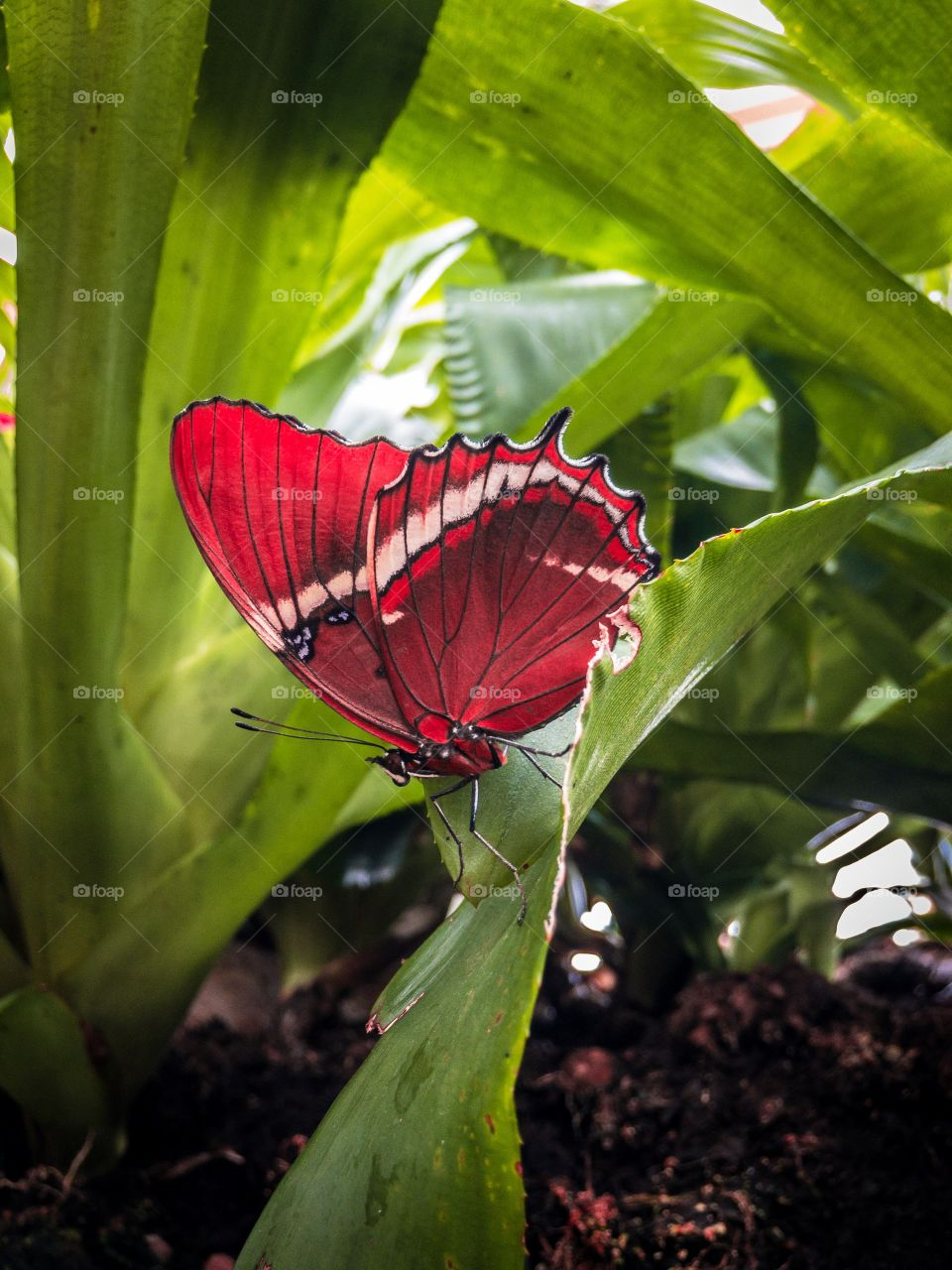 A red winged butterfly sitting on a green plant