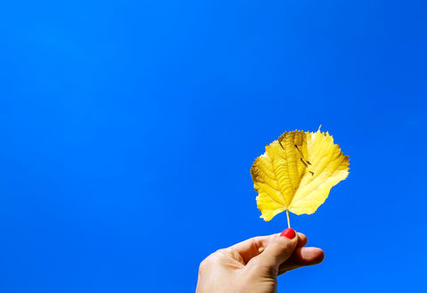 Fall yellow leaf on blue sky background