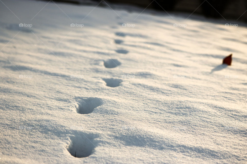 Footprints in the Snow- I love how the snow is still perfect, untouched around the footprints.