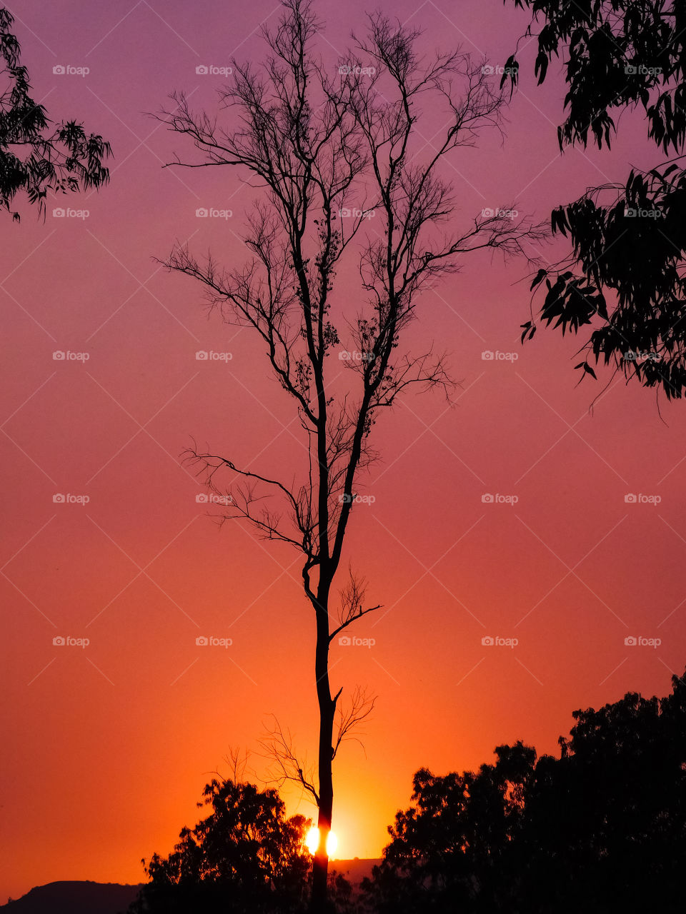 Colourful Beauty Of Sunset with tree composition. hidden sun behind the tree.