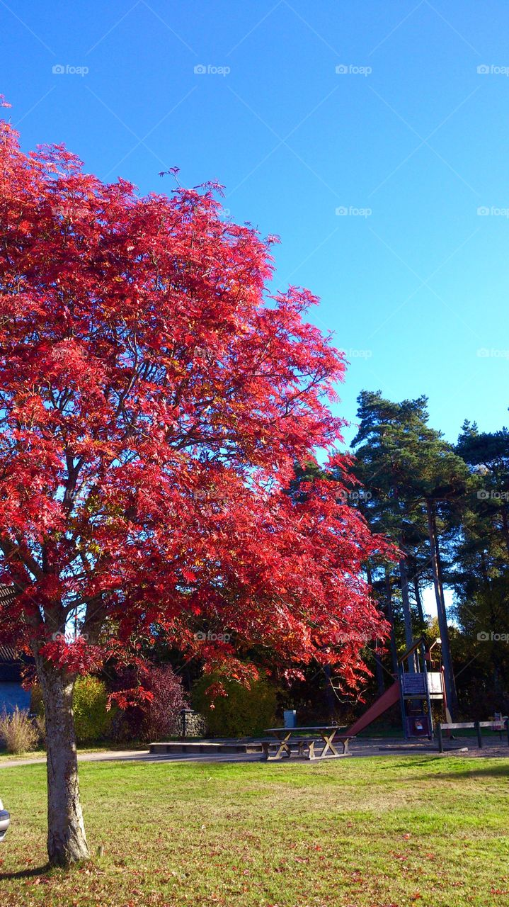 Red tree.  Red tree