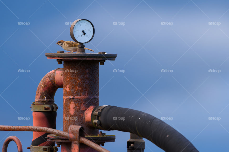 Sparrow sitting behind meter and on top of a red and rusty old machine