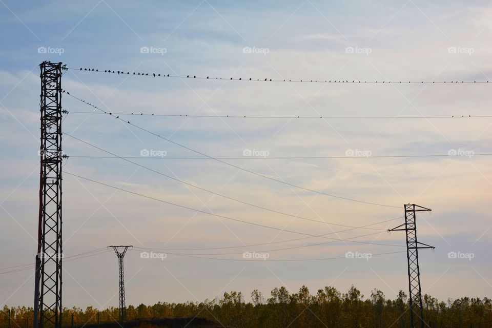 birds on the wires during the sunset